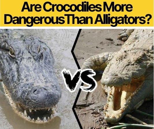 Are Crocodiles More Dangerous Than Alligators