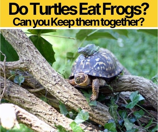 Do Turtles Eat Frogs