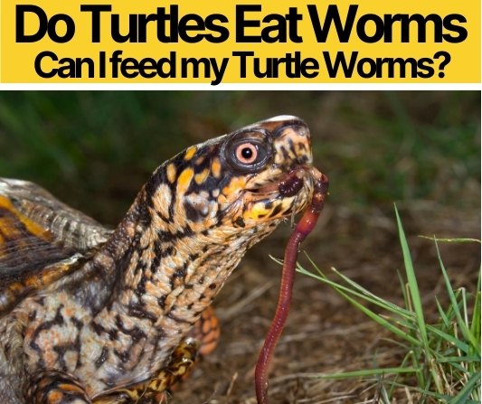 Do Turtles Eat Worms
