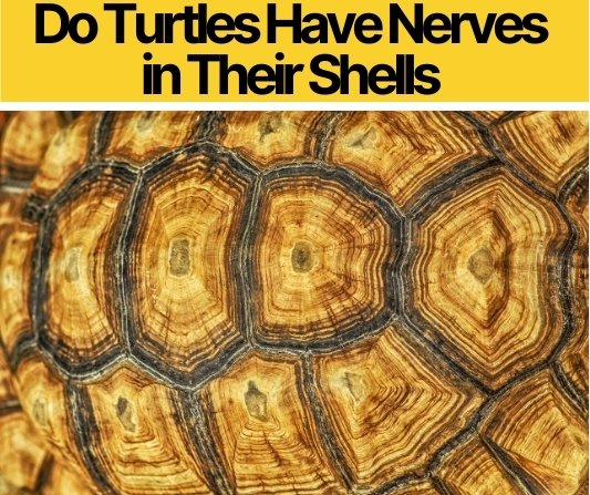 Do Turtles Have Nerves in Their Shells