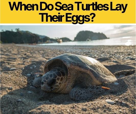 When Do Sea Turtles Lay Their Eggs