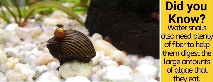 water snail feeding guide